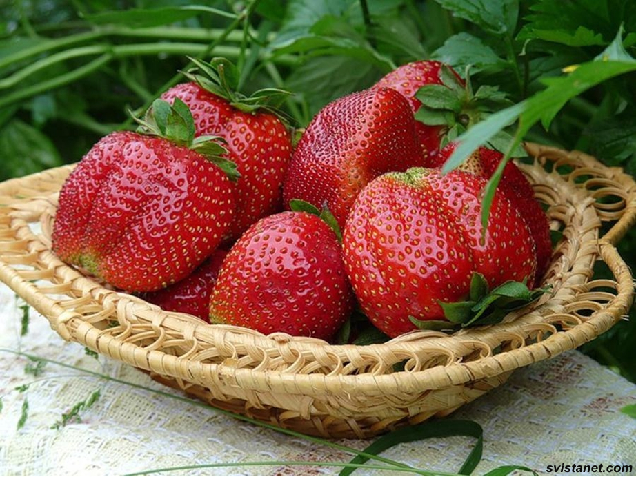 ягоды фото клубника земляника