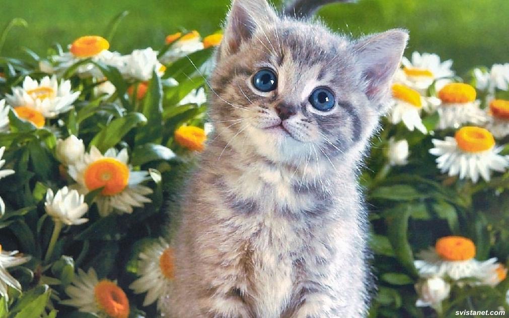 фотографии котят с возрастом