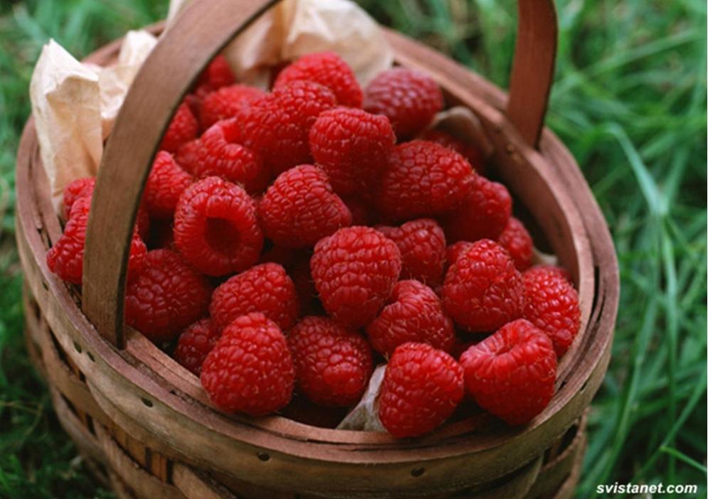 фото ягоды малина