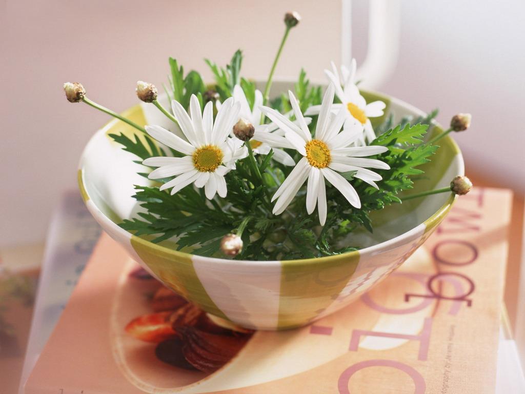 Цветы ромашек на столе
