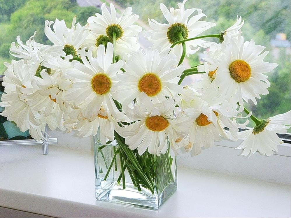Ромашки букет фото цветов