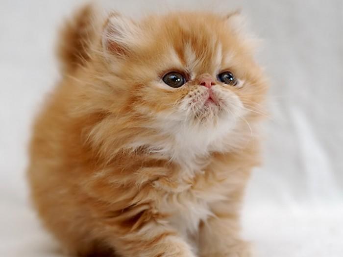 афоризмы про кошек